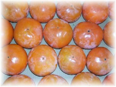 富有柿-2