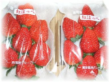 紅ほっぺ-1