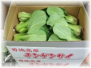 DSCF3863青梗菜