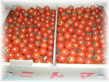 バラミニトマト