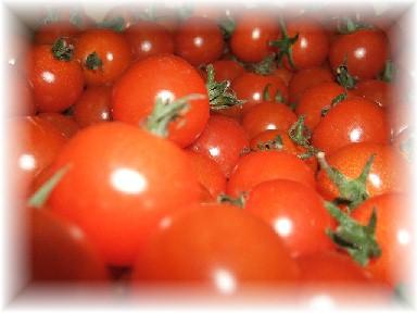 バラミニトマト-1