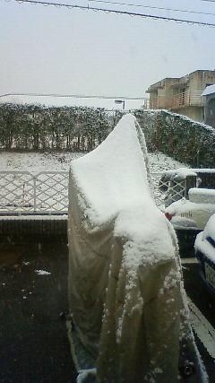 2011 初積雪