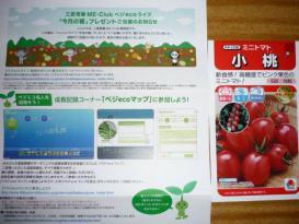 ミニトマトの種