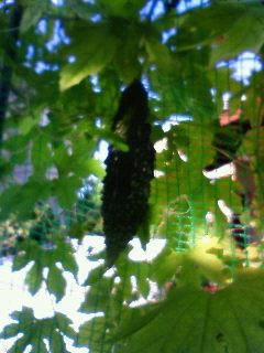 2010-09-17NEC_0044.jpg