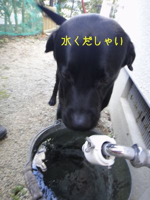 b2_2011 01 16_2576