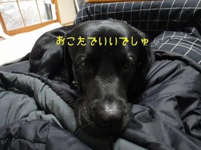 b_2011 01 19_2547