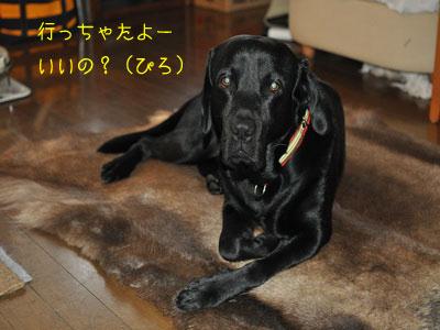 b2_DSC_0003.jpg
