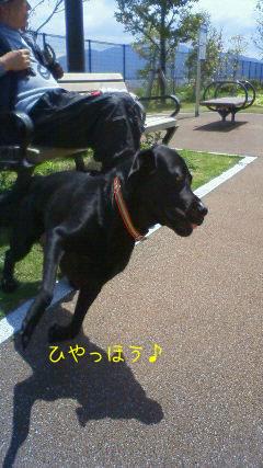 b_2010-04-15_NEC_0067.jpg