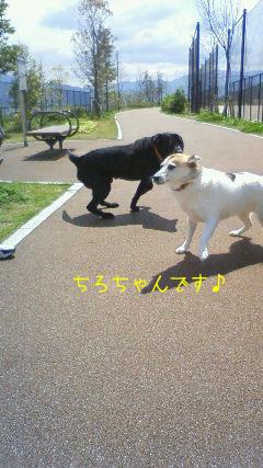 b_2010-04-15_NEC_0068.jpg
