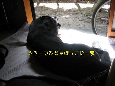 b_20100430IMG_0635.jpg