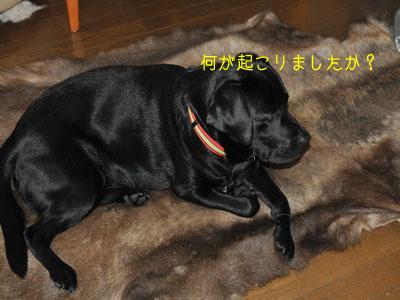 b_DSC_0008.jpg
