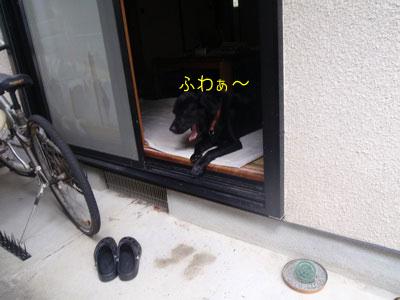 b_P6190038.jpg