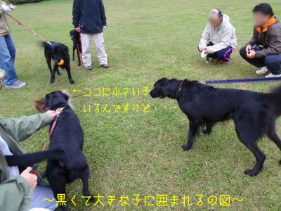 b_PB220087.jpg