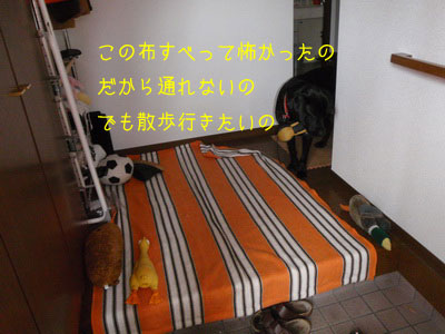 b_PC090035.jpg
