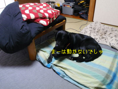 b_PC240001.jpg