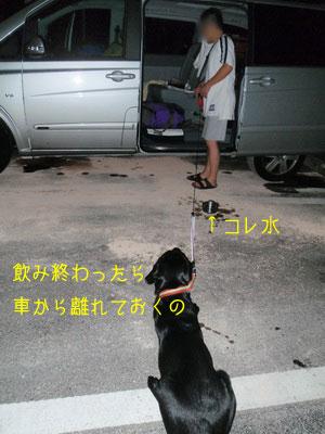 b_touhoku_20100811_0108.jpg