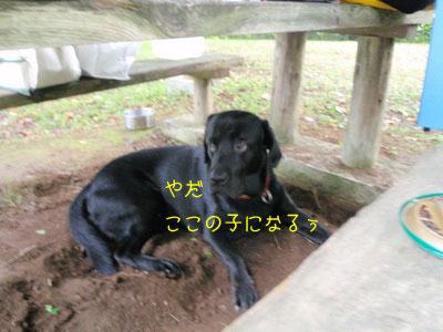 b_touhoku_20100811_0465.jpg