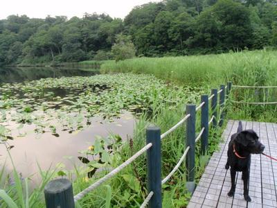 touhoku_20100811_0862.jpg