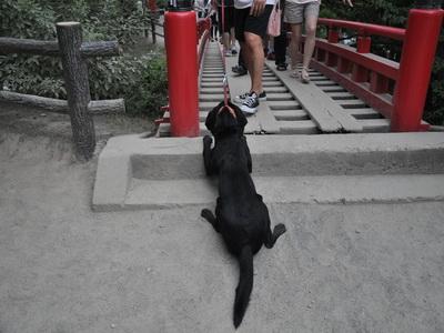 touhoku_20100811_1004.jpg
