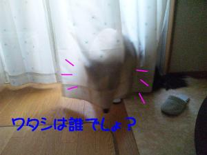 100425_180909mt.jpg