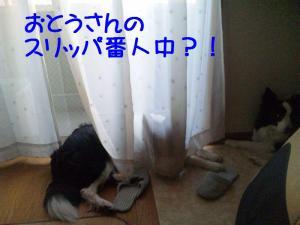 100425_180927mt.jpg