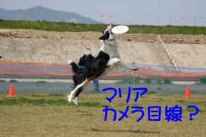 20100418_6806mt.jpg
