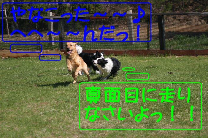 20100502_7315mtx.jpg