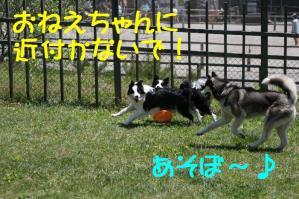 20100515_7800mt.jpg