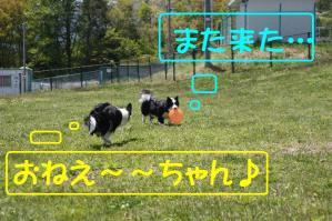 20100515_7836mt.jpg