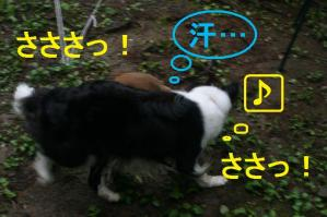 20100813_8434mt.jpg