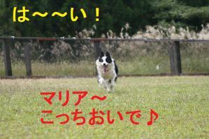 20100919_8866mt.jpg