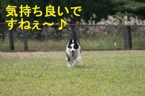 20100919_8868mt.jpg