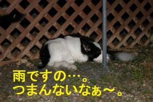 20100919_8940mt.jpg