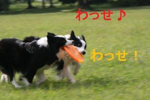 20101002_9037mt.jpg