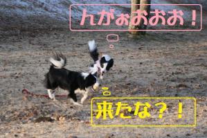 20110101_11492mt.jpg
