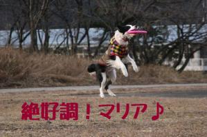 20110101_11840mt.jpg