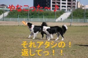IMG_9311mt.jpg