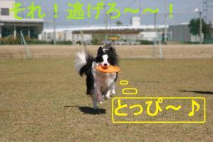 IMG_9317mt.jpg