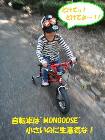 111029_PIC001.jpg