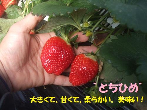 120130_PIC004.jpg