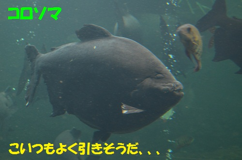 120325_PIC005.jpg