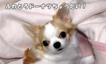 10marine_1001_02.jpg