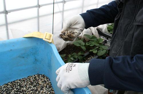 肥料を撒く作業