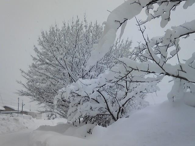 木に積もる雪