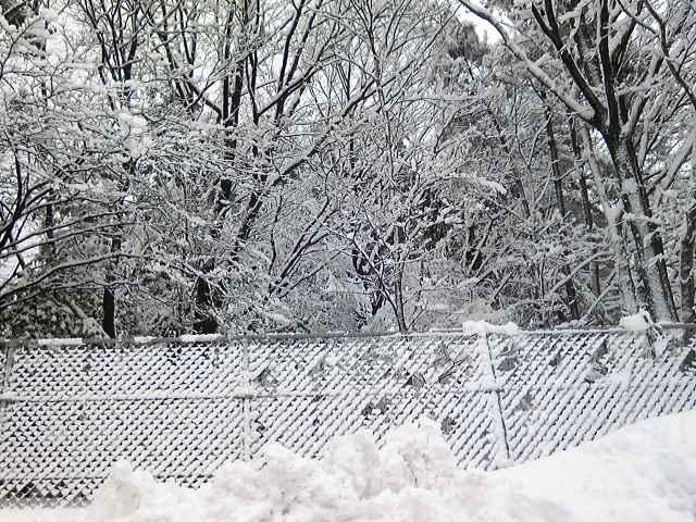 積雪 裏山2