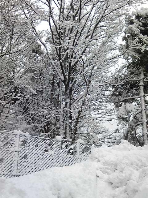 積雪 裏山