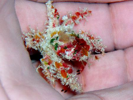 甲殻類不明種