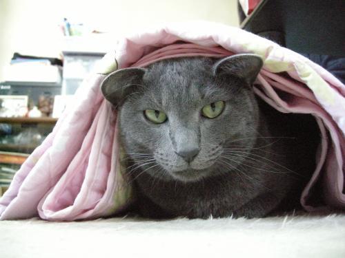 まねき猫4