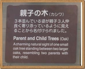 親子の木1(解説)