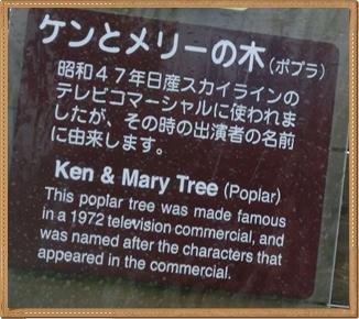 ケンとメリーの木1(解説)